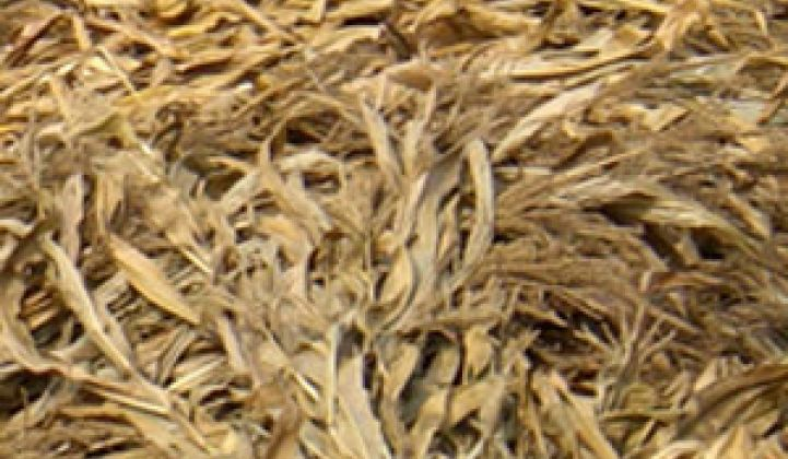 Ag Giants to Bring Cellulose Feedstock to Biorefinery Doors