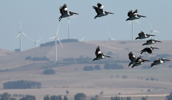 The wind industry should be holding itself to the highest standards for wildlife protection.