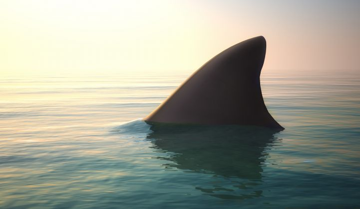 Introducing the Shark Curve
