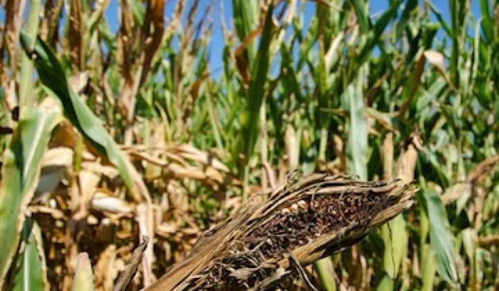 Even With RFS, Ethanol Can't Escape Drought Impact