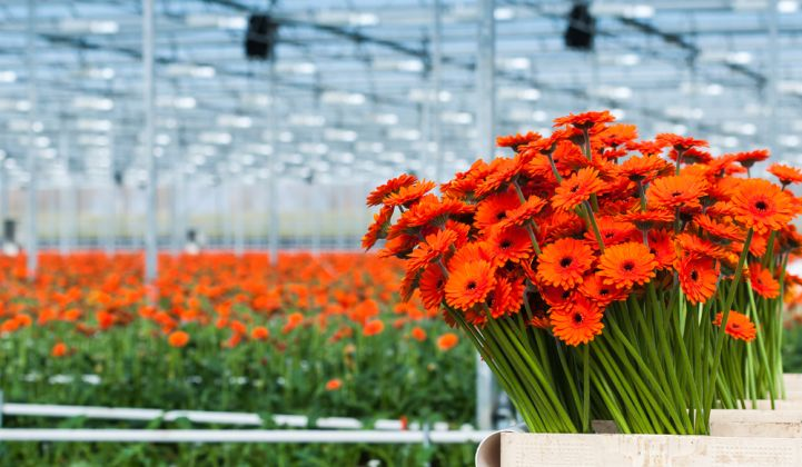 LEDs Can Triple the Efficiency of Greenhouse Lighting