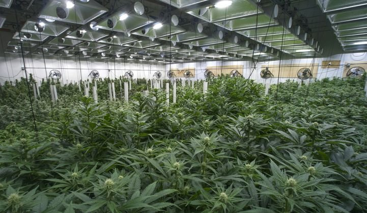 California Regulators Worry They're Not Prepared for Energy-Use Surge From Legal Marijuana Growing