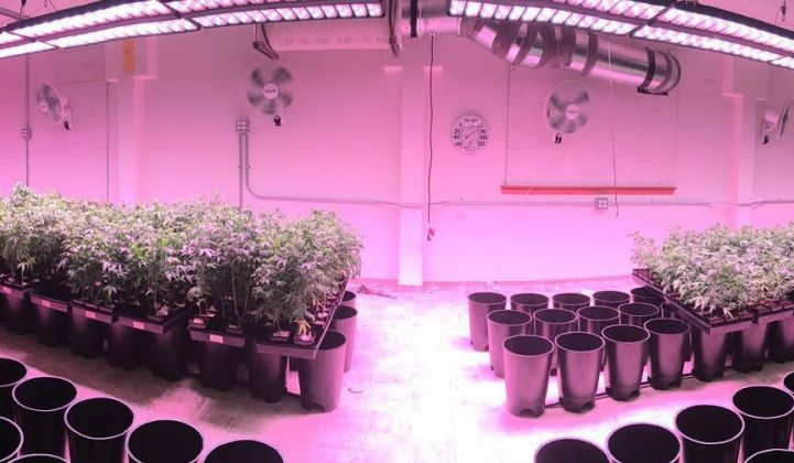 LEDs Light Up Indoor Farming and Marijuana Cultivation