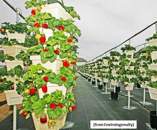 The Farm of the Future Will Grow Plants Vertically and